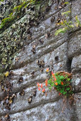 Columbine Rock Ledge