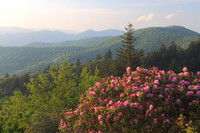 Cranberry Ridge Rhododendrons Blue Ridge Parkway