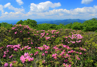Craggy Gardens Catawba Rhododendrons Trail View