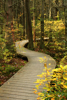 Atlantic White Cedar Swamp Boardwalk