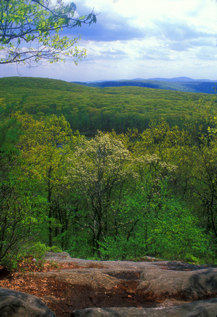 Beartown State Forest Appalachian Trail Spring