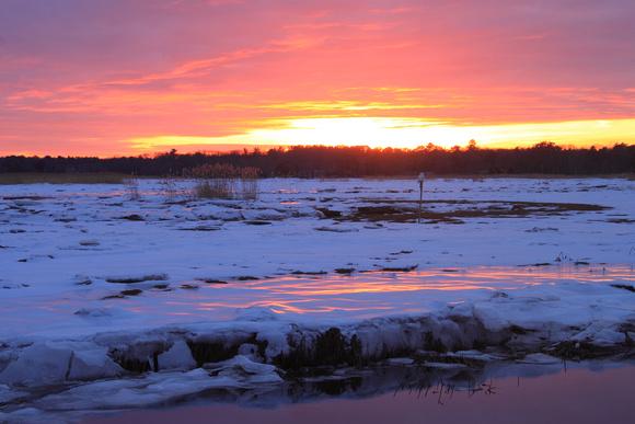 Salisbury Beach Winter Wetland Sunset with Snowy Owl