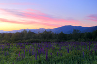 Sugar Hill Lupines and Mount Lafayette Dawn CWB